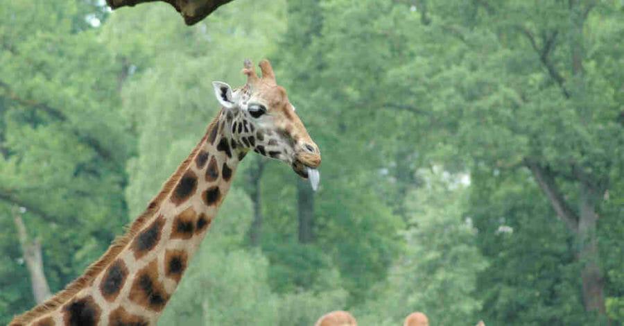 Langage girafe communication non violente